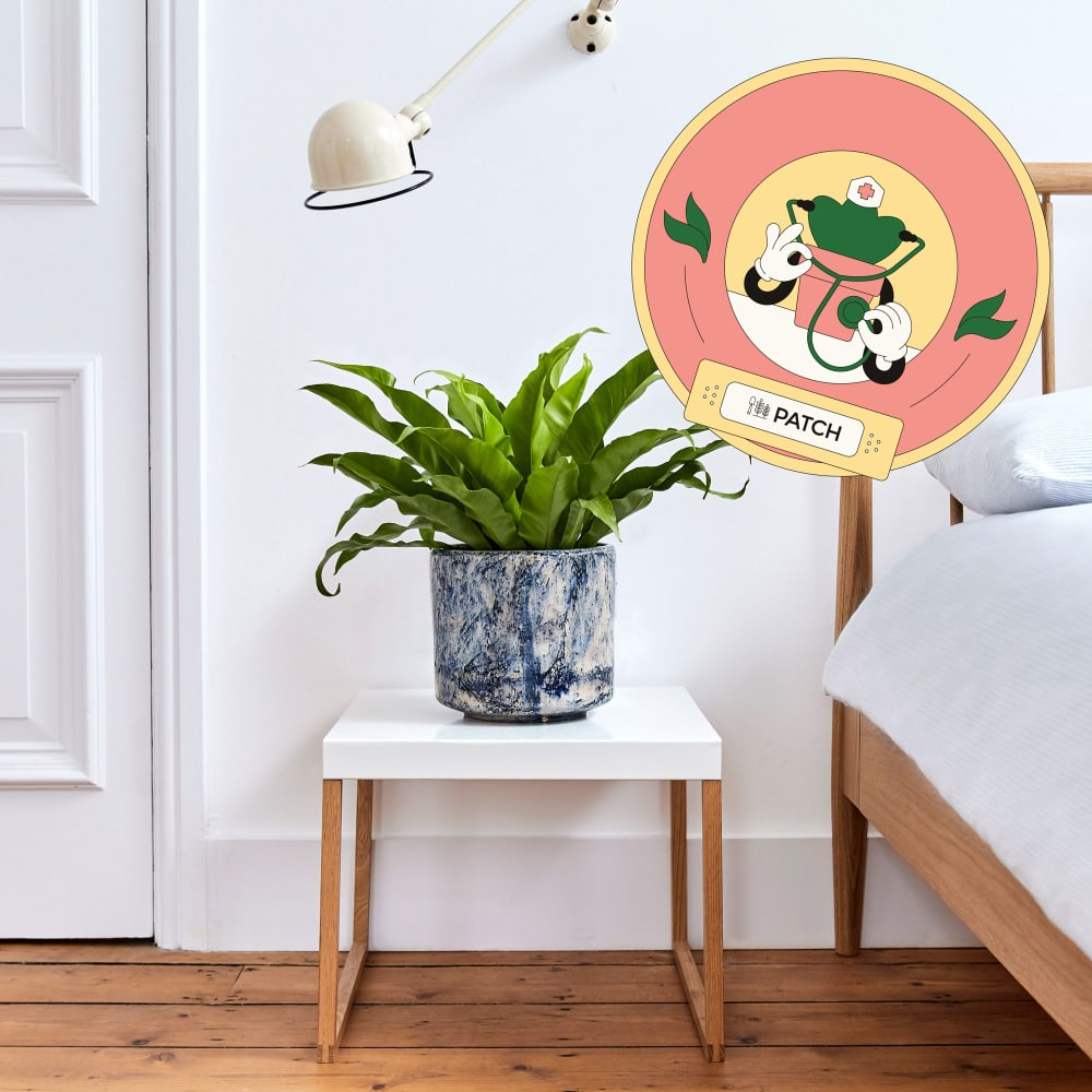 Recevez l'aide de nos docteurs pour plantes
