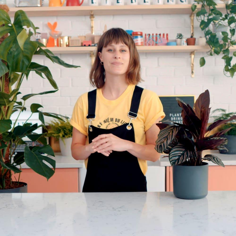 Alice makes plant care easy