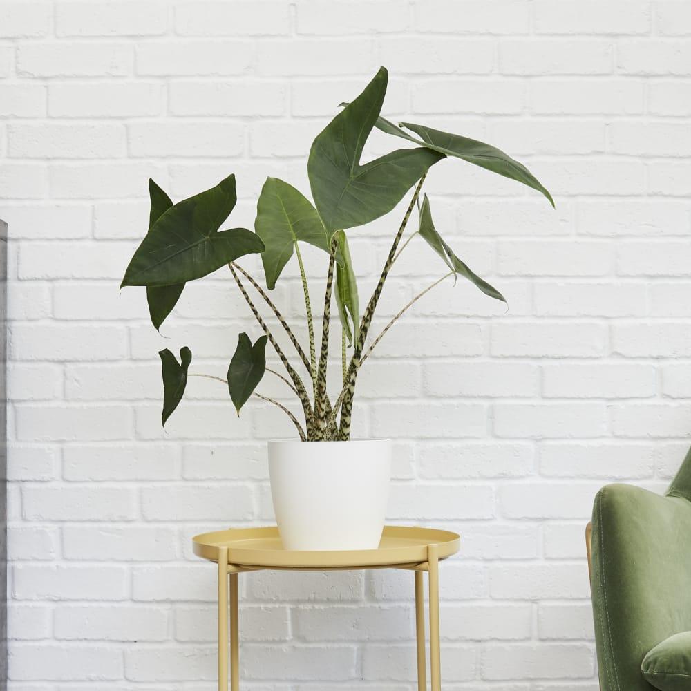 Urban Gardening Gifts Under £50