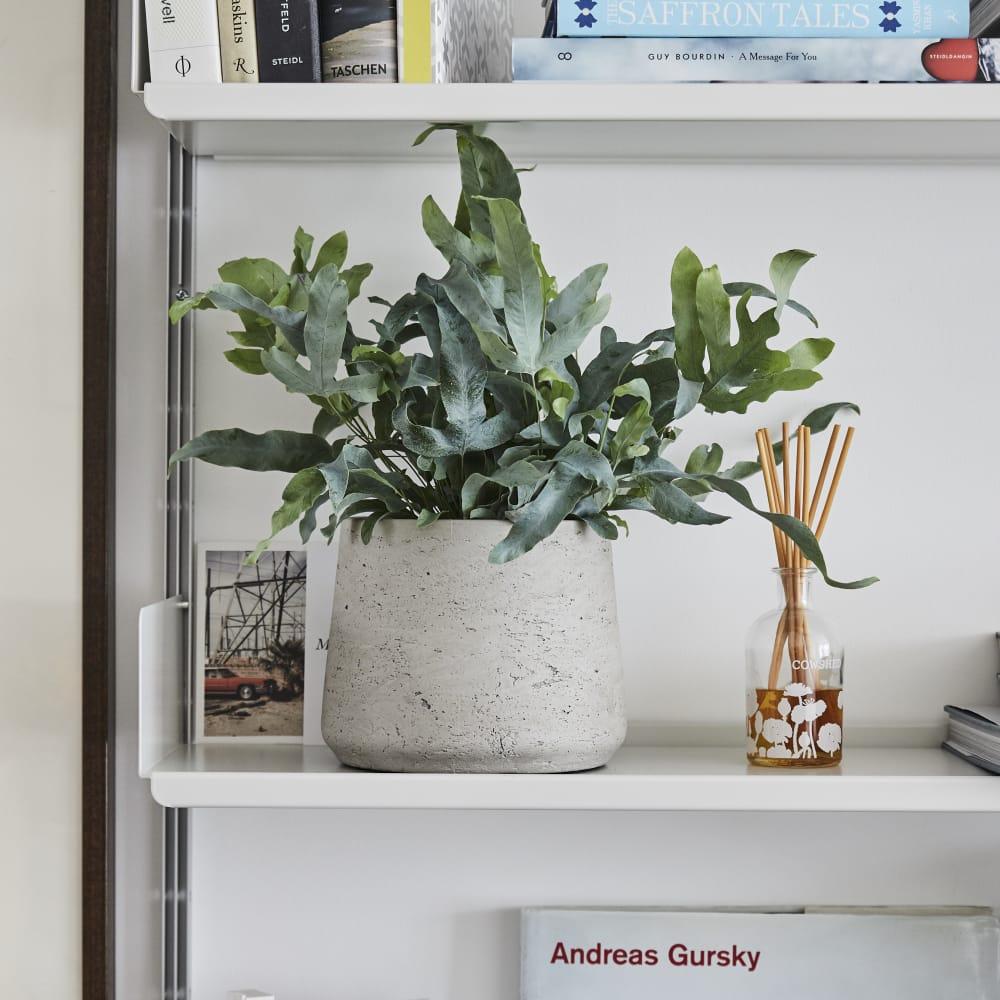 Urban Gardening Gifts Under £30
