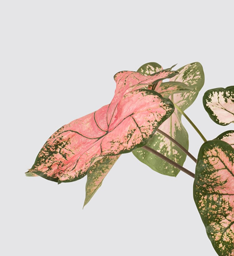 Rare and unusual plants