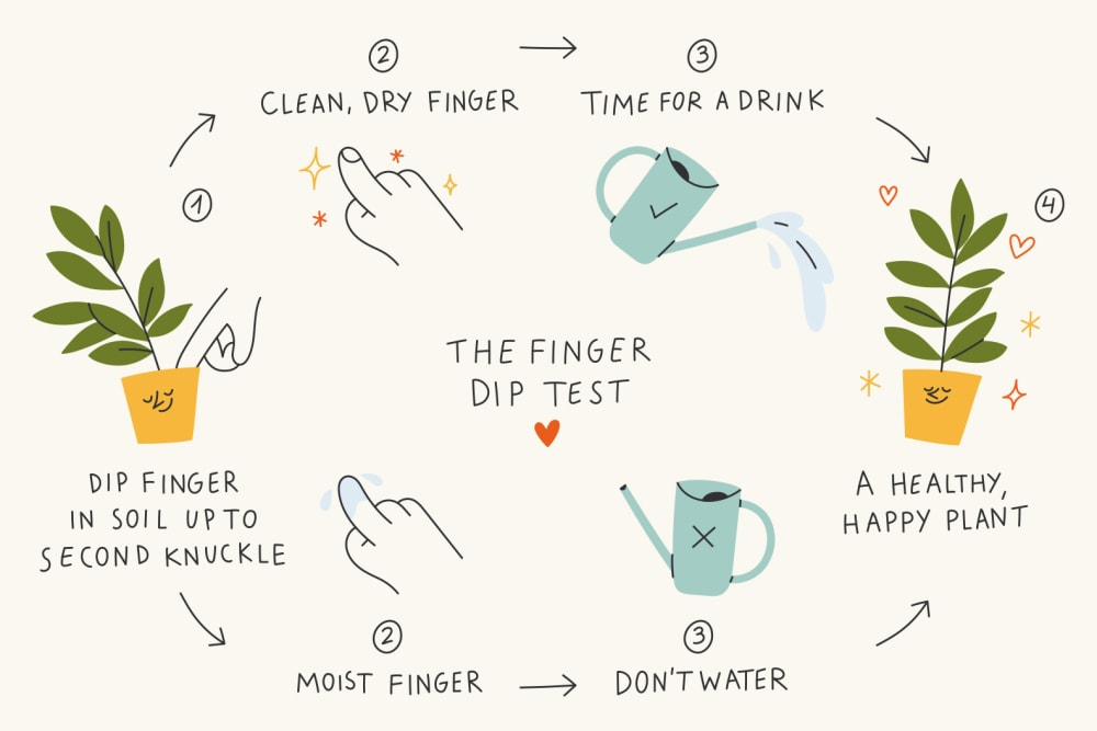 Patch finger dip test illustration. Dip your finger into the soil and water your plant if the finger comes out dry.