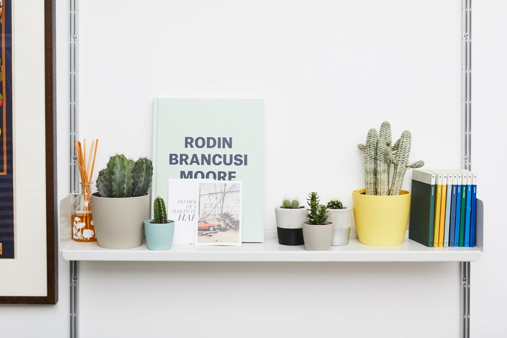 Shelf with six cacti in plastic and ceramic pots