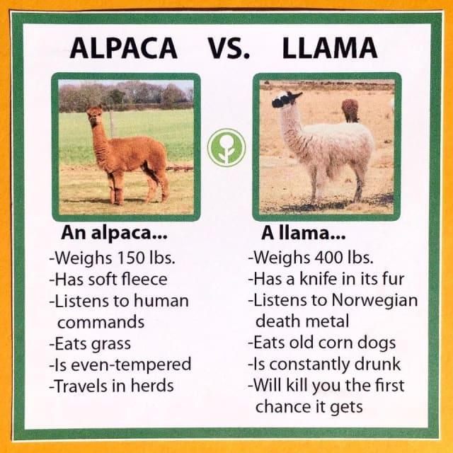 alpaca-llama