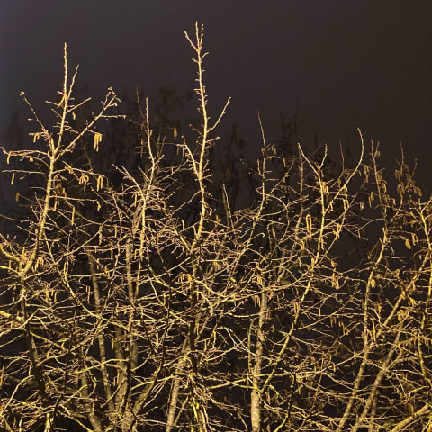 Top branches of a tree illuminated by an overhead street light.
