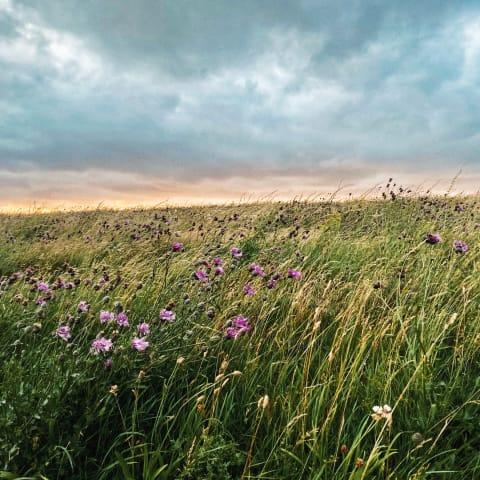A field of wild flowers.