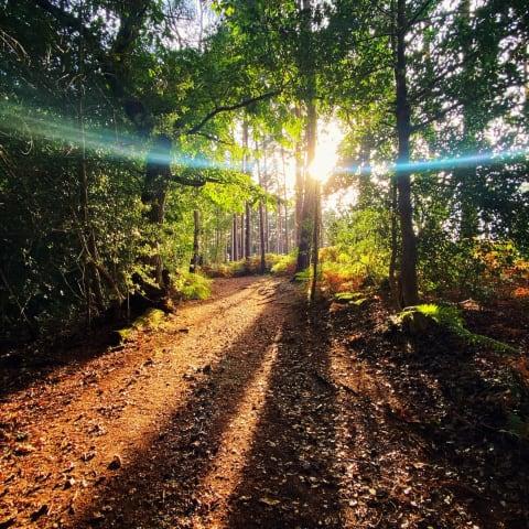 Sun rays breaking through some trees in Roydon Woods.