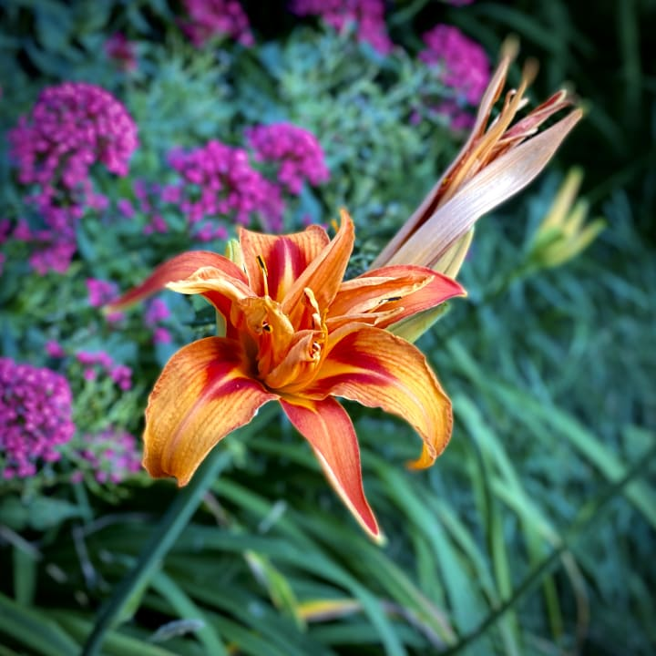Colourful flower.