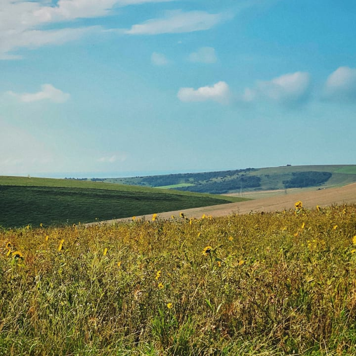 Wild flowers on the South Downs.
