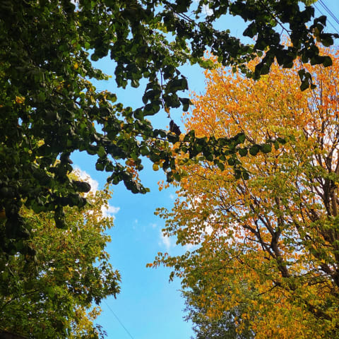 Trees with orange leaves starting to appear.