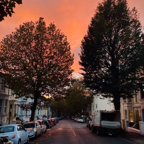 Redish sky over a leafy residential street.