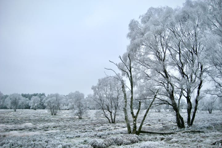Frost covered countryside, with a row of trees bisecting the land.