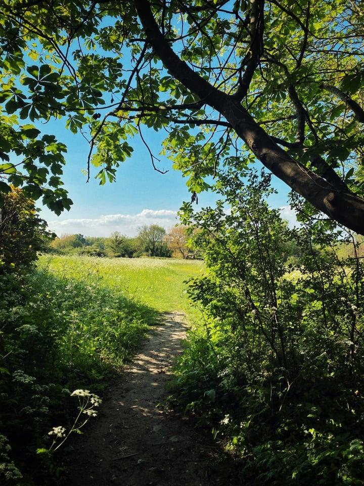 View of a path ahead through a green field.
