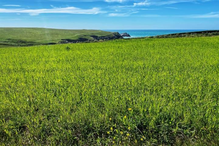 Lush green field near Porth Jole.