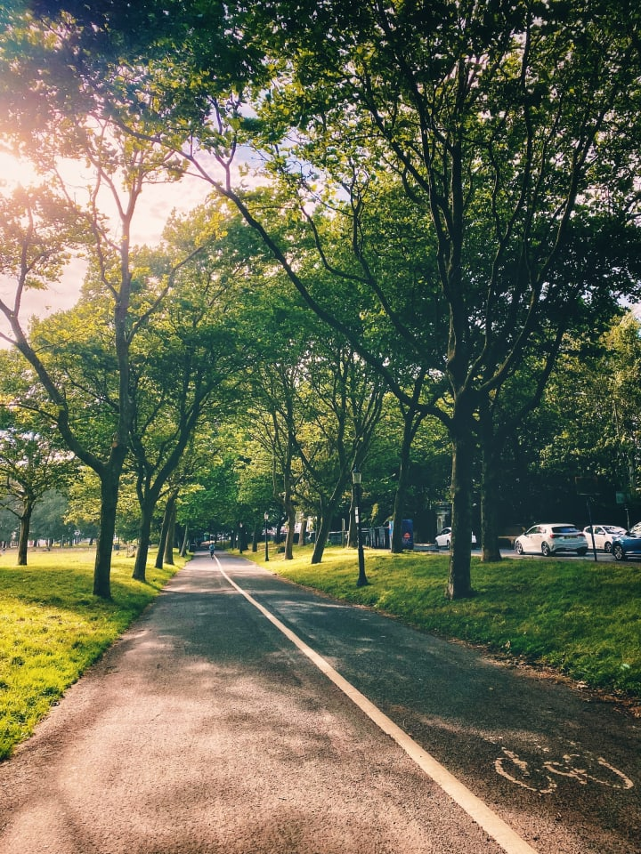A tree-lined path with sunlight poking through some branches.