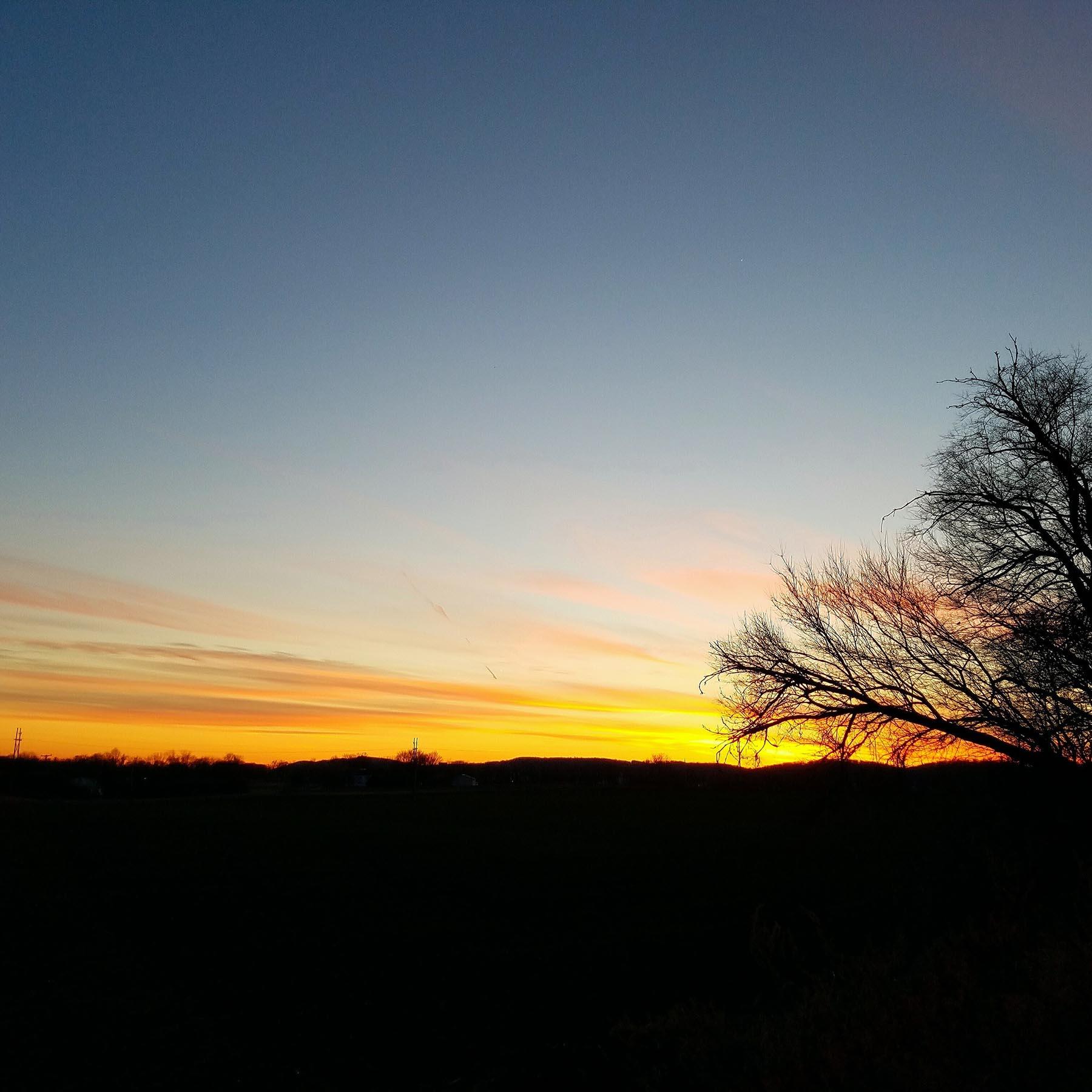 A tree stands dark infront of a firey sunset