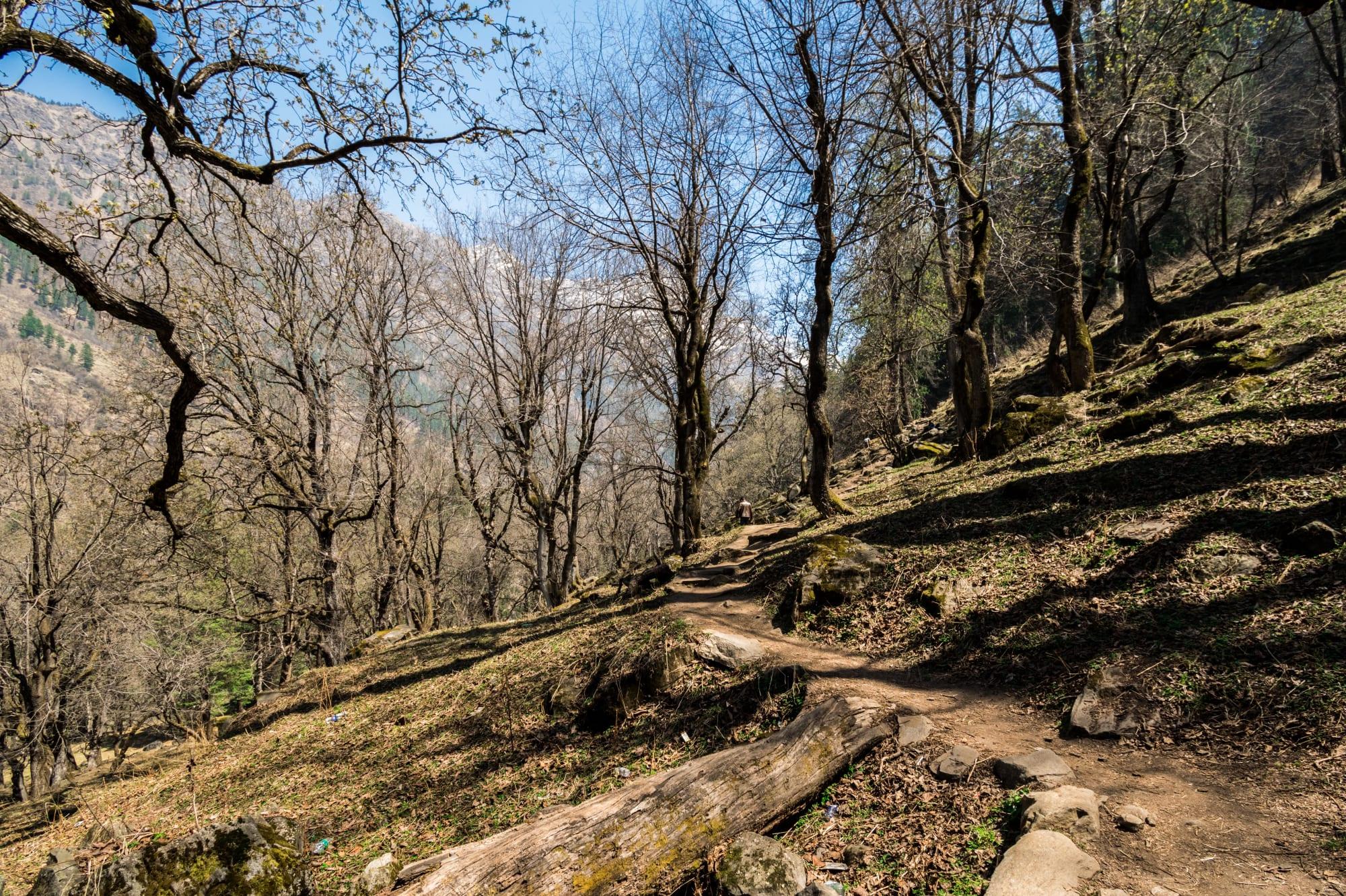Mesmerizing view throughout the trek to Kheerganga
