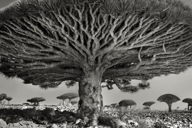 Heart of the Dragon (Yemen, 2010) by Beth Moon