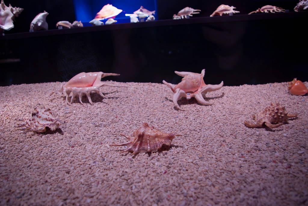 Морской музей, Литва