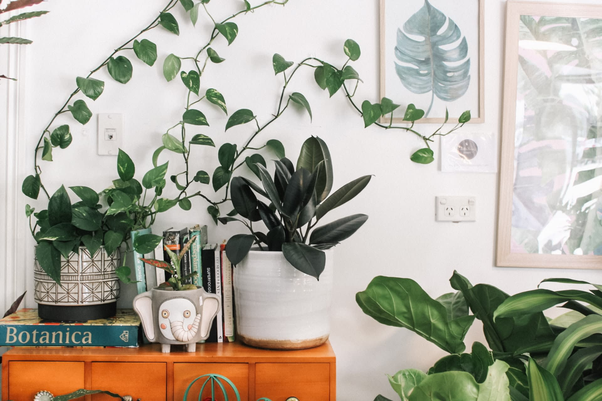 How to incorporate nature into your home