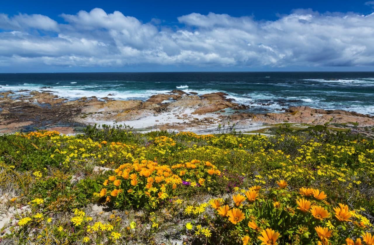Best spots to watch wildflowers bloom on the West Coast