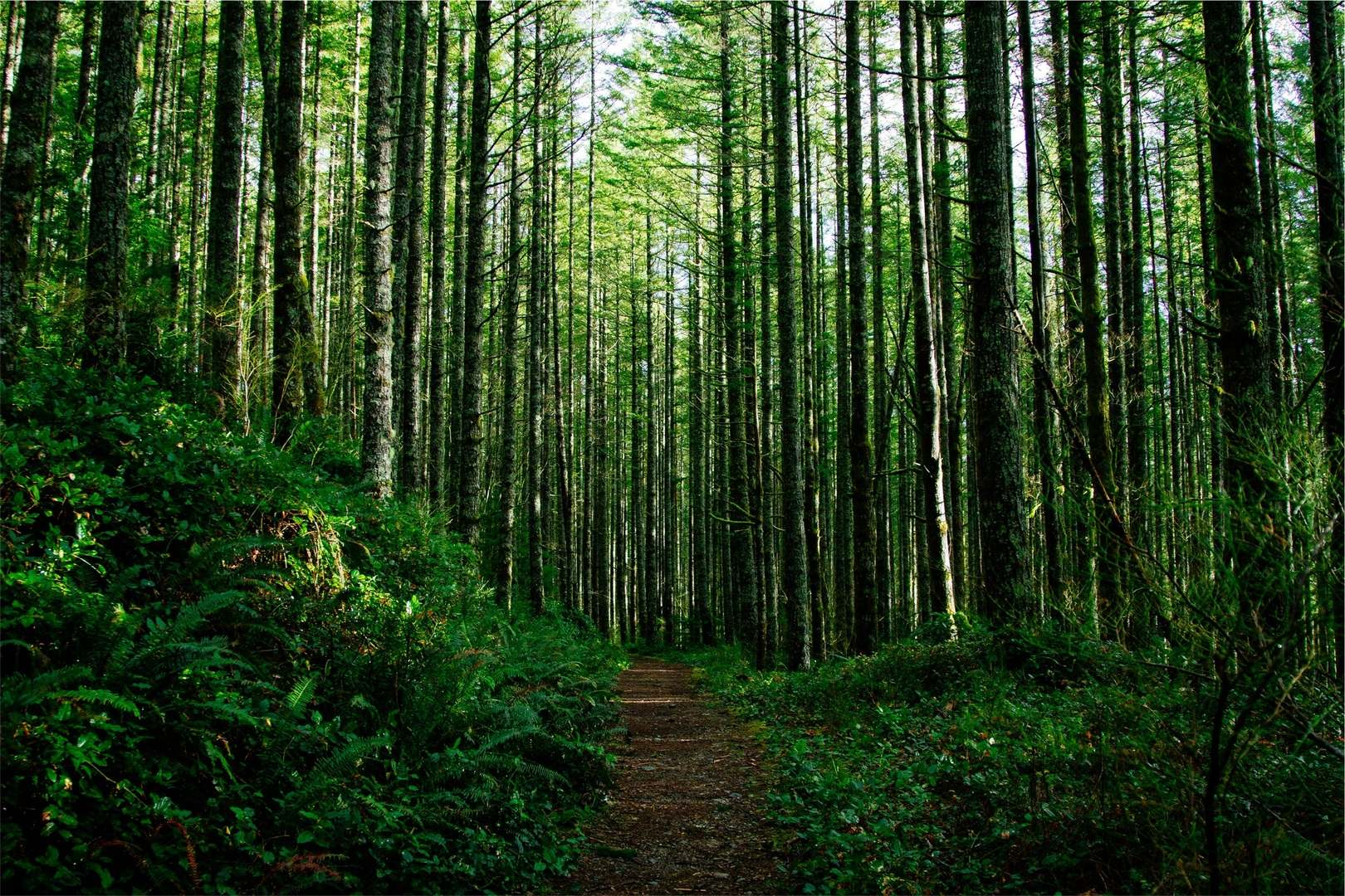 tree-nature-forest-branch-plant-trail