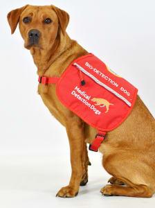 Florin a medical detection dog