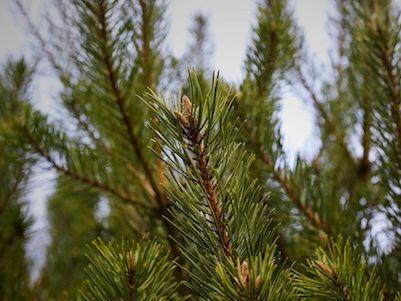 Resourcify Abfallverzeichnis Tannenbäume im Netz - AVV 20 02 01
