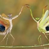 Monad Mantis