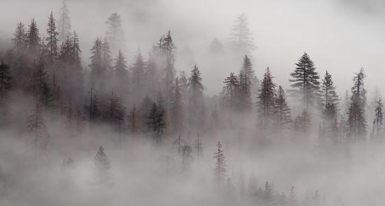 Mountain trees shrouded in fog