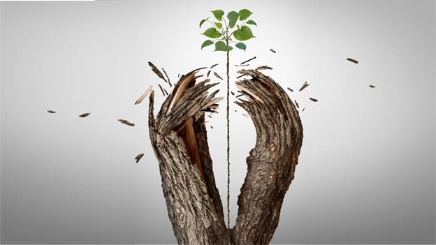 Revival of employees' resilience through emotional reflexivity