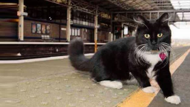 Oh Meow! A cat gets promoted in a rail company