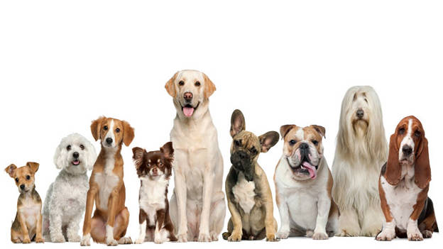 Animals beyond Pets: As employees and engagers
