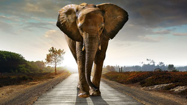 Taming of the elephant