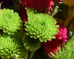 Green Bunch of Flowers