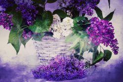 Purple Bunch of Flowers
