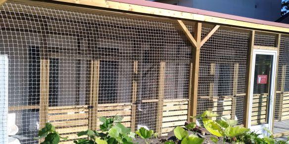 Colocat, la colonie des chats
