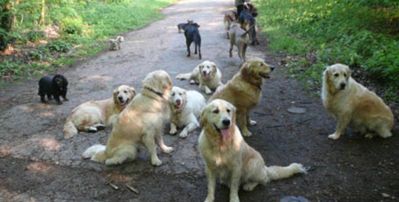 Doggies et compagnie