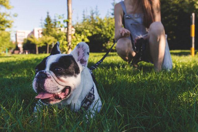 Trouvez un Pet Sitter