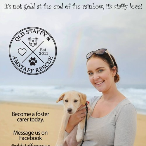 ****Foster Carers Needed**** - Staffy Dog