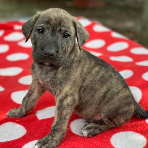 Romeo - Mixed Dog