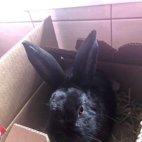 Bonbon - Dwarf Rabbit