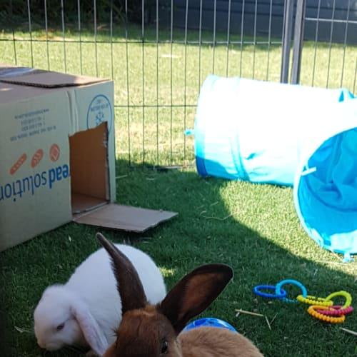 Aspen and Hunter -  Rabbit