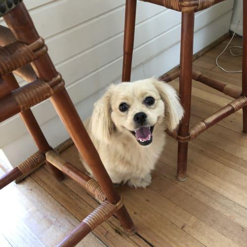 Mencia - Mixed Breed Dog