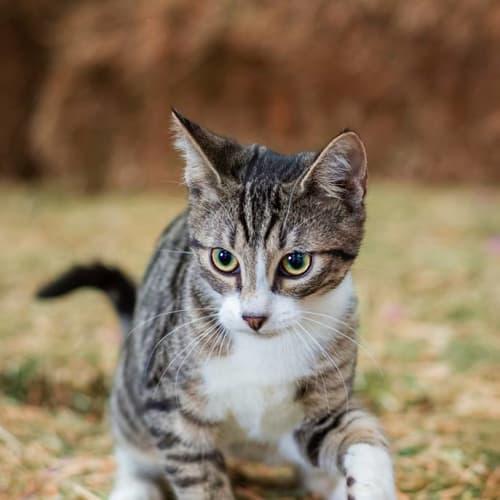baf5a1c551d Rubix    2nd Chance Cat Rescue