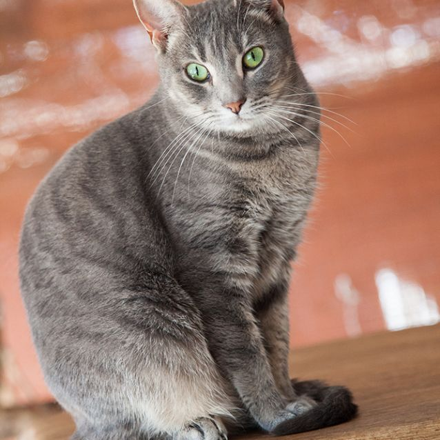 Photo of Merida