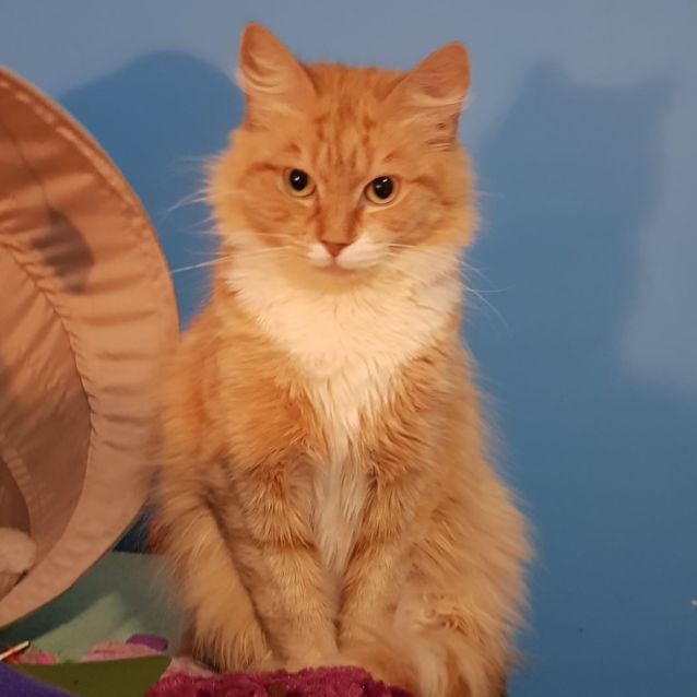 Photo of Angela ** 2nd Chance Cat Rescue**