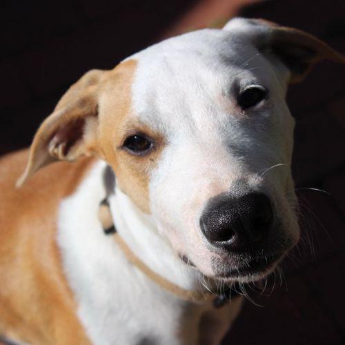 Holly - Mixed Dog