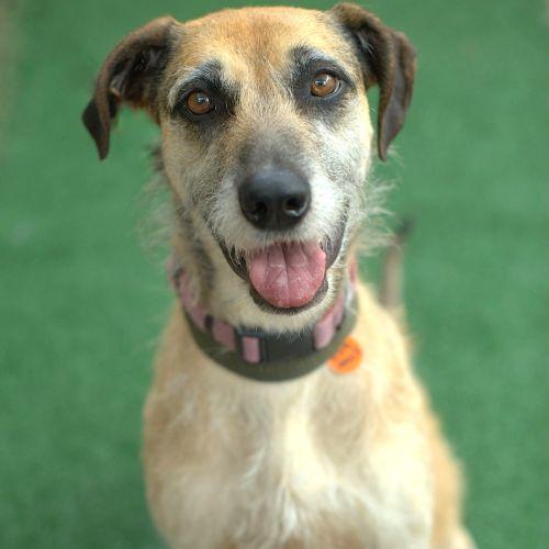 Snow & Lana - Greyhound Dog
