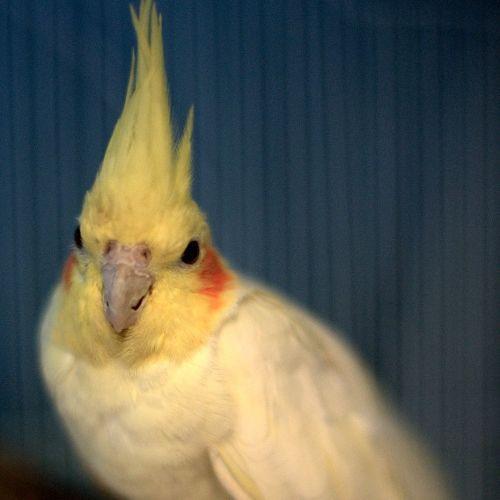 Remy -  Bird